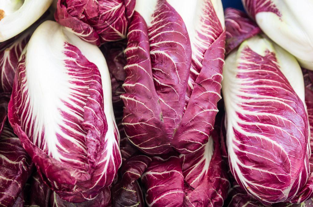 radicchio lettuce, variety